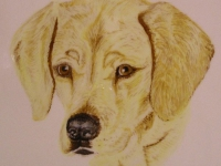 golden-lab-0749-1-1