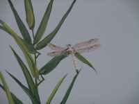 hcg-dragonfly-with-bamboo